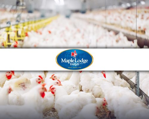 Lascom's PLM solution at Maple Lodge Farms